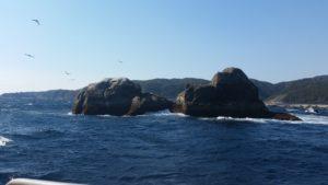 周参見、カツオ島釣行🎵
