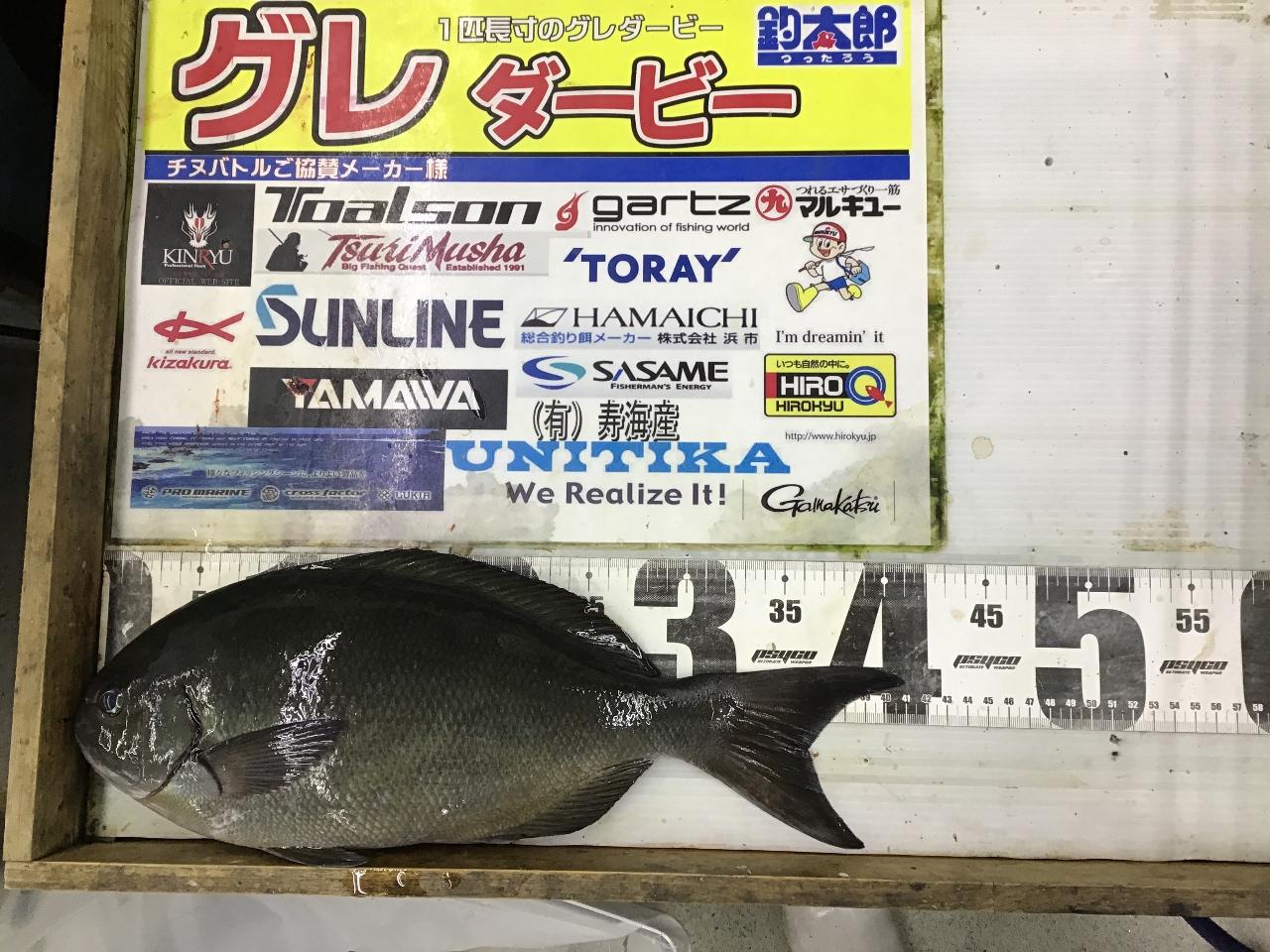 1/1 たかっち様第二回グレダービー2019年釣果(太地沖磯)41.4cm