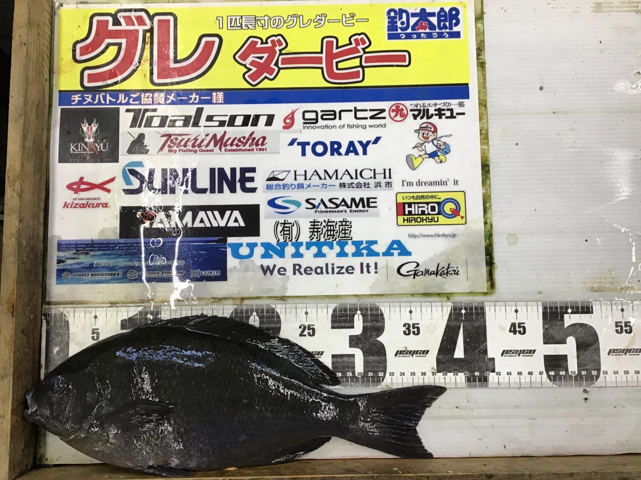1/2 かずひろ様  第2回グレダービー2020釣果(串本地磯)38.2cm