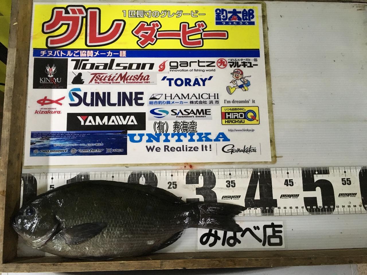 1/8 さやふん様  第2回グレダービー2020釣果(日置川磯)37.6cm