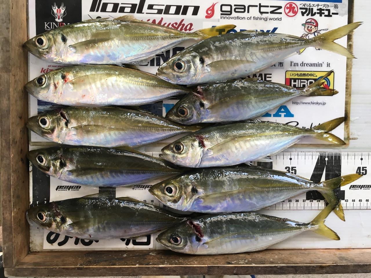 2/2M村ノリオ様 加尾漁港でアジ 25cmから約30尾