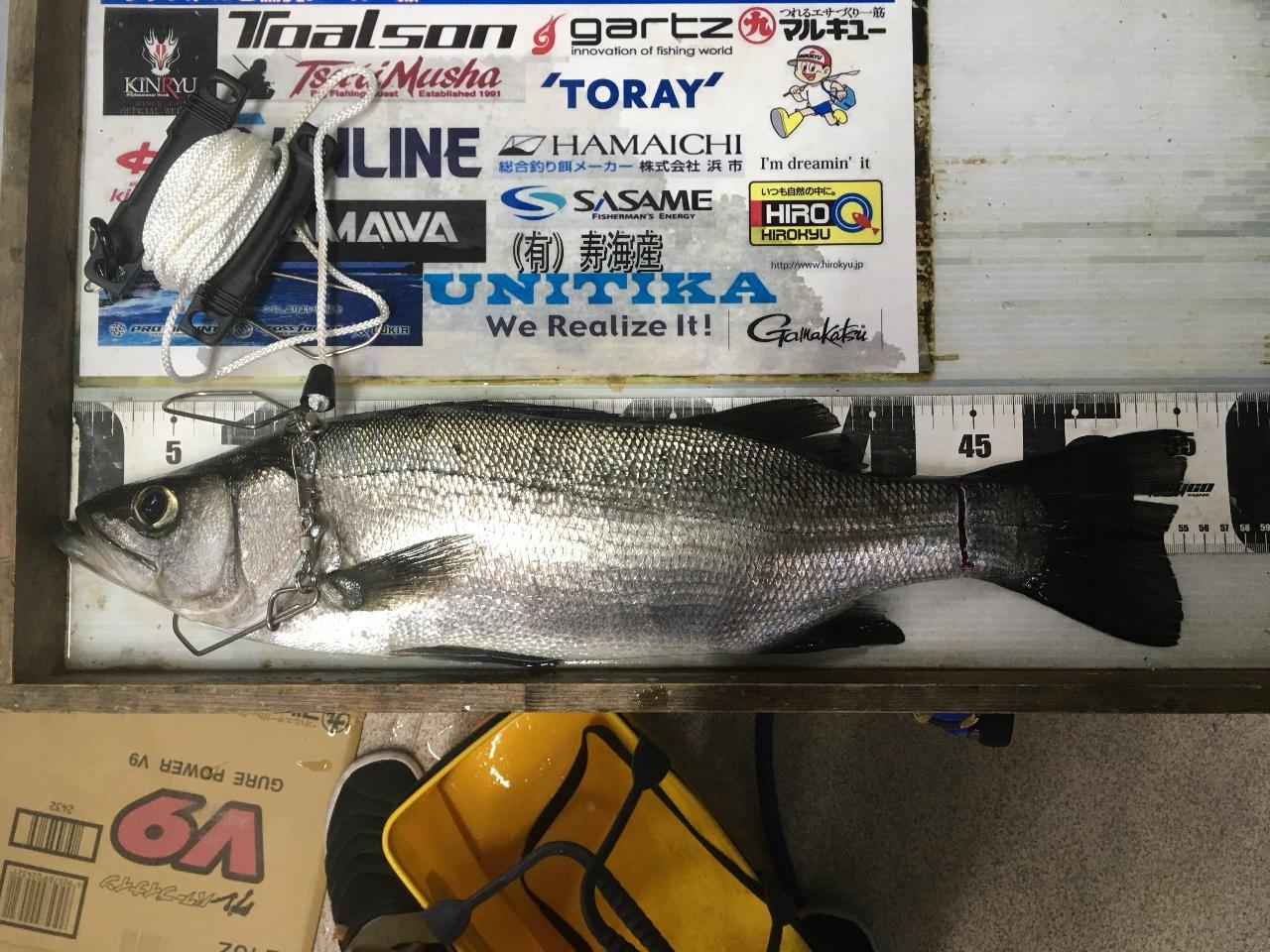 3月29日 タガワ様 シーバス 55cmの釣果