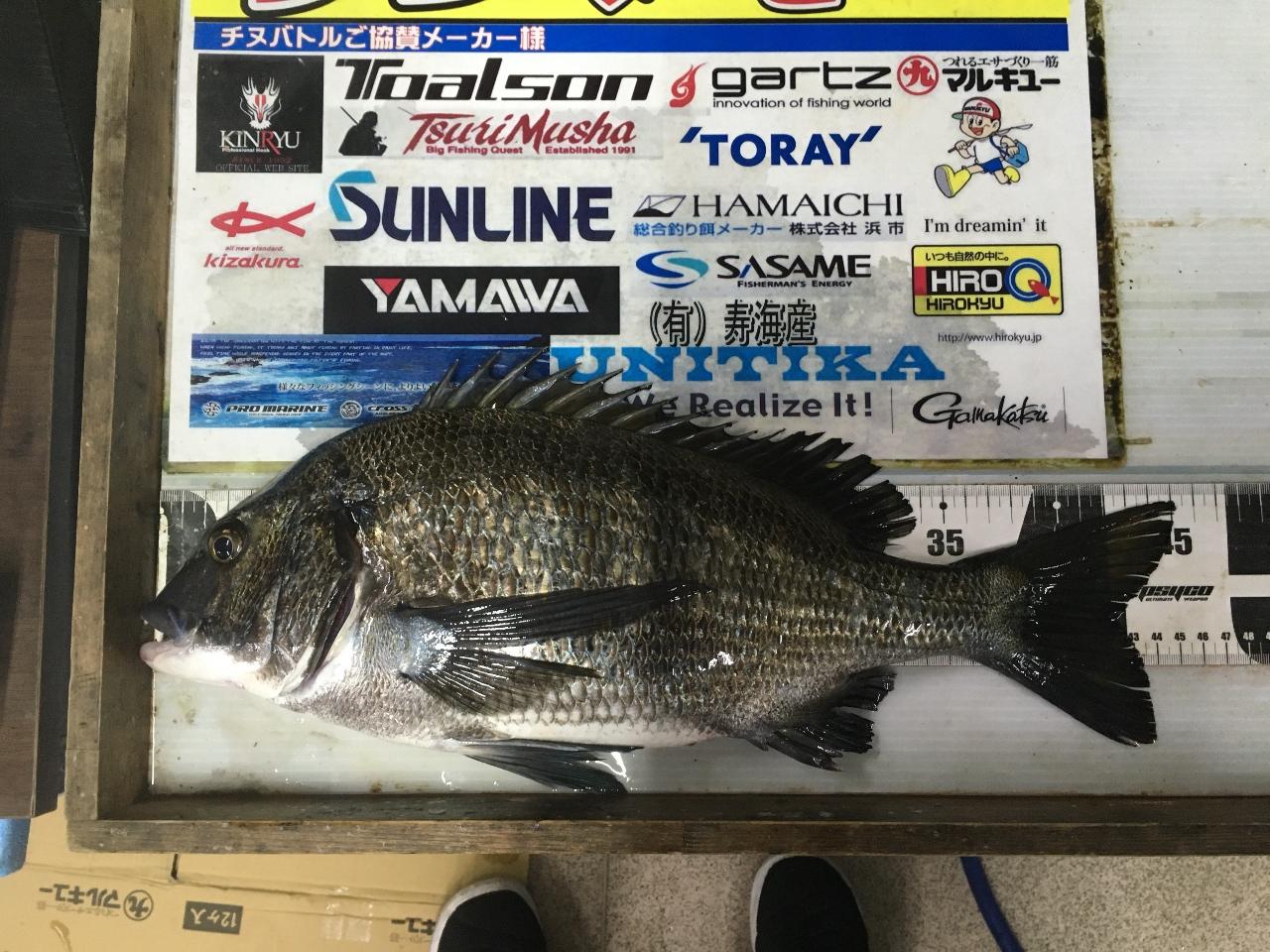 3月29日 トヨダ3様 チヌ 45・3cmの釣果