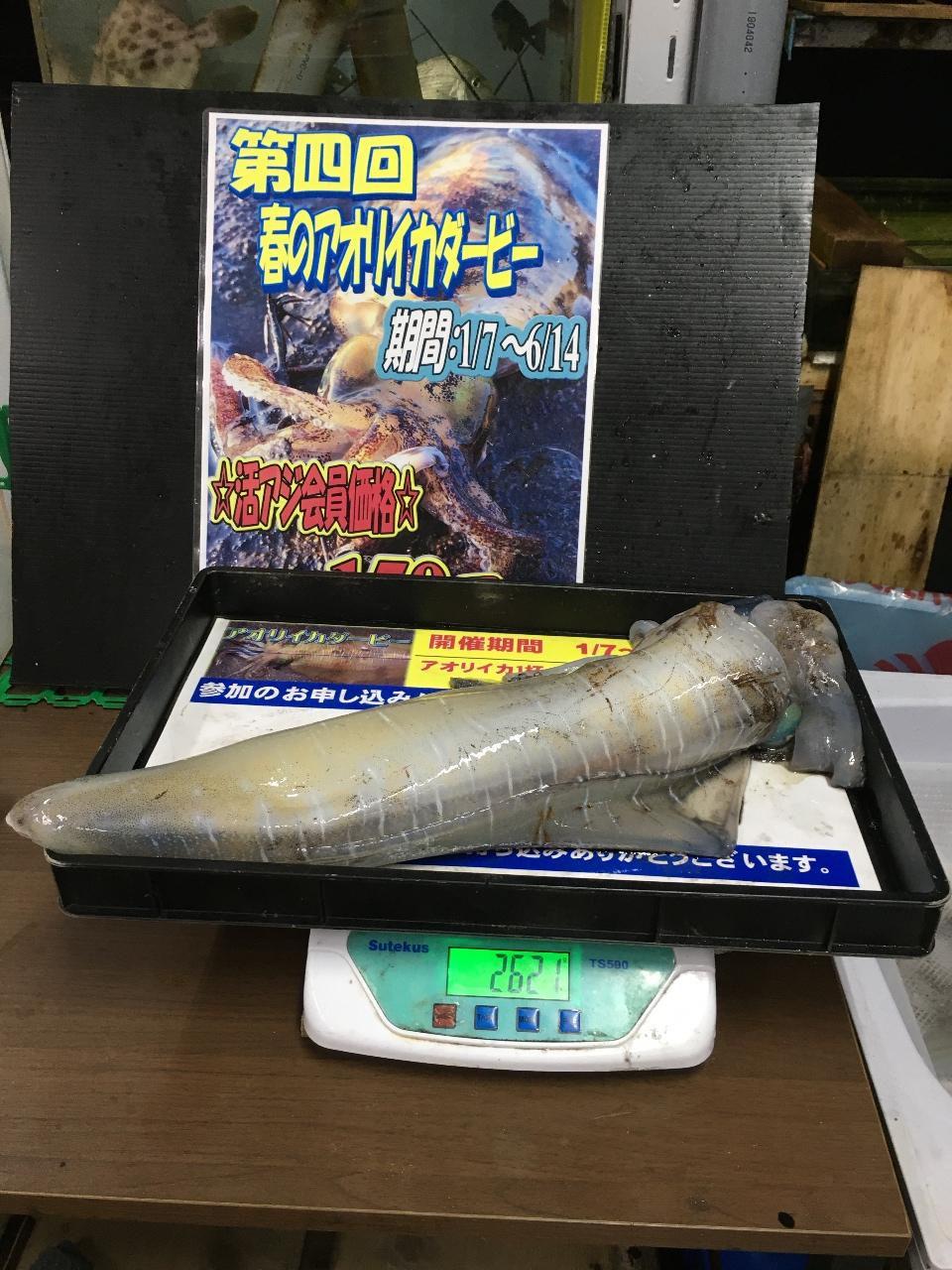 5/27 れいもえゆう 様よりの釣果情報
