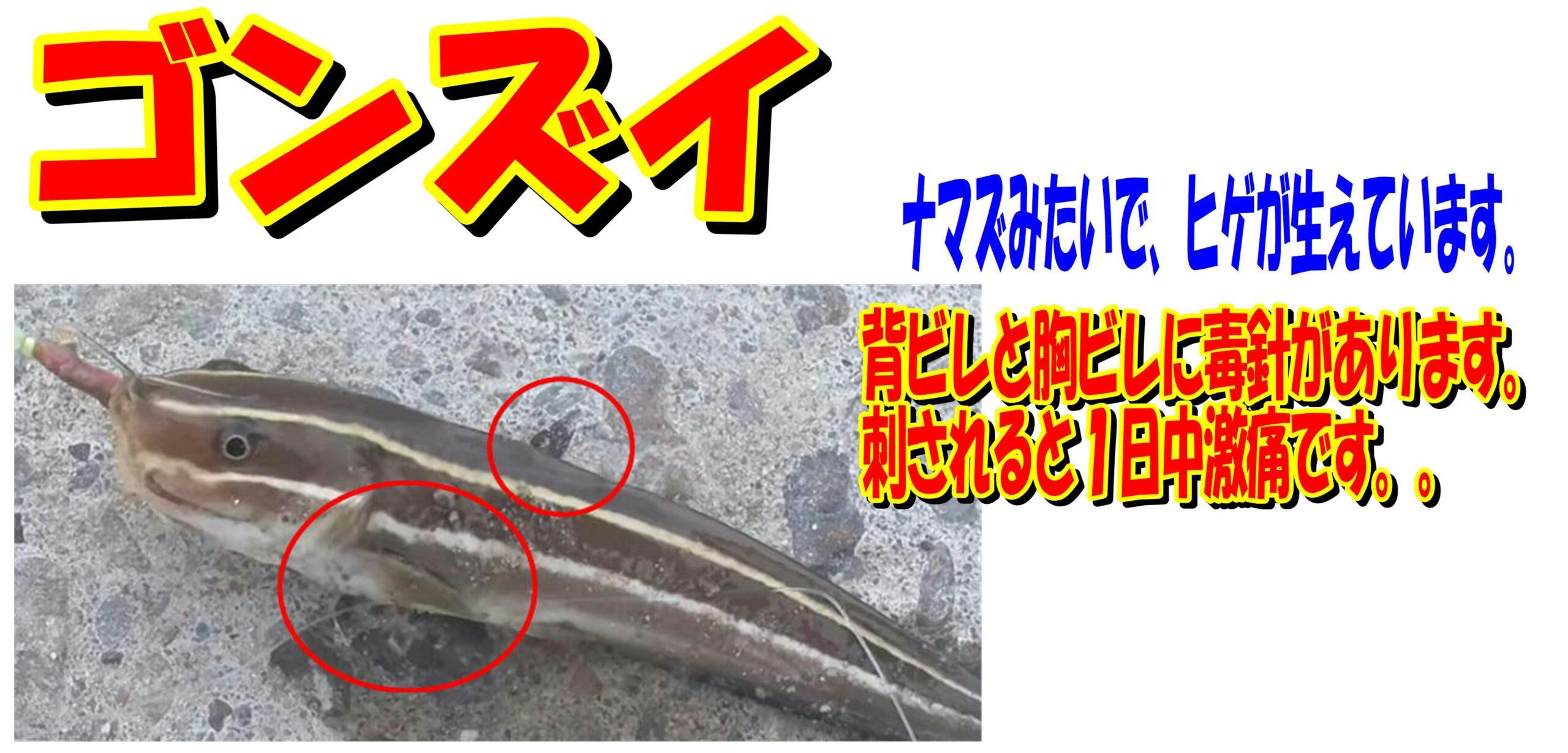 毒を持つ魚類に注意!