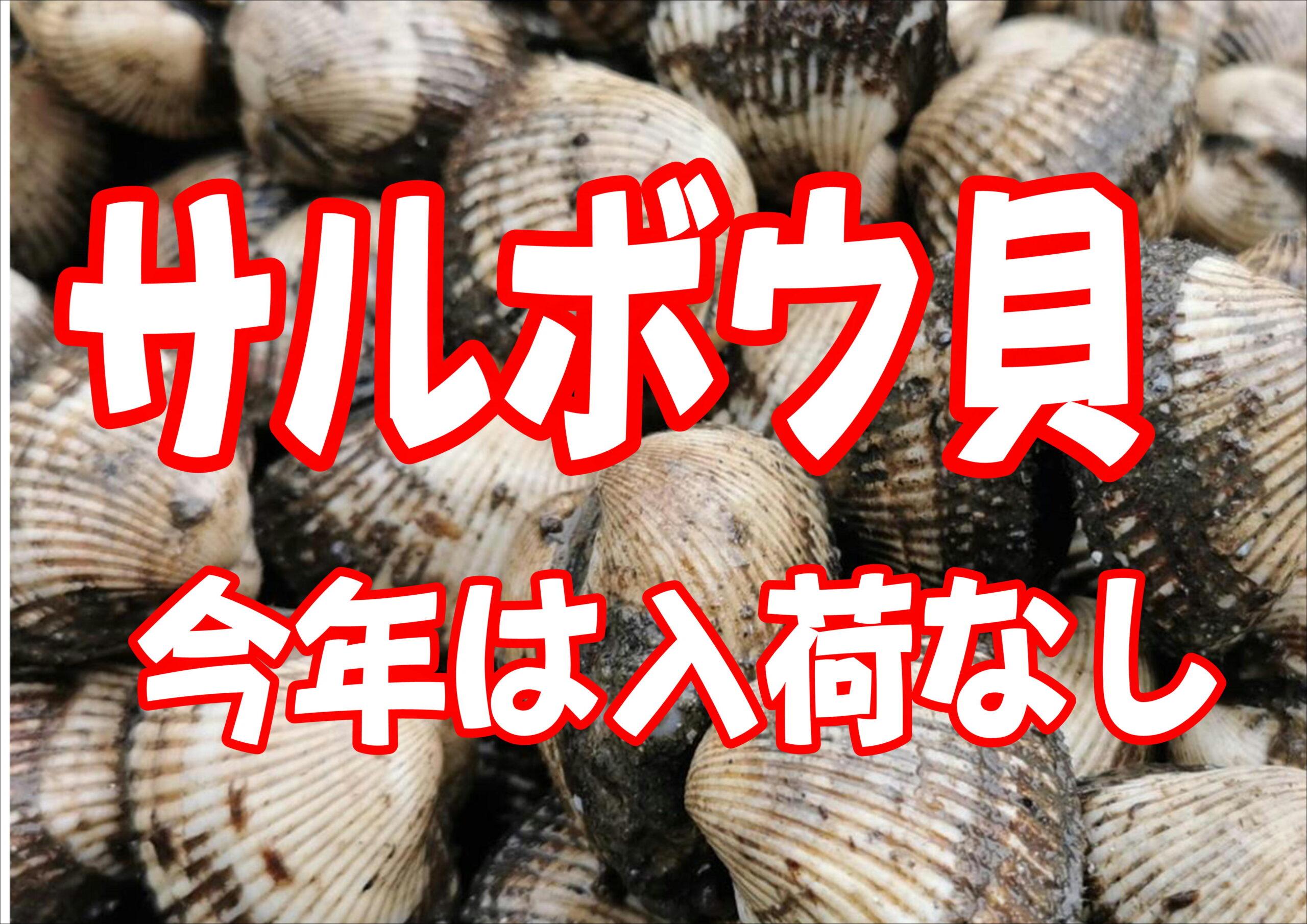 春の底物エサ サルボウ貝は、今年は入荷なし