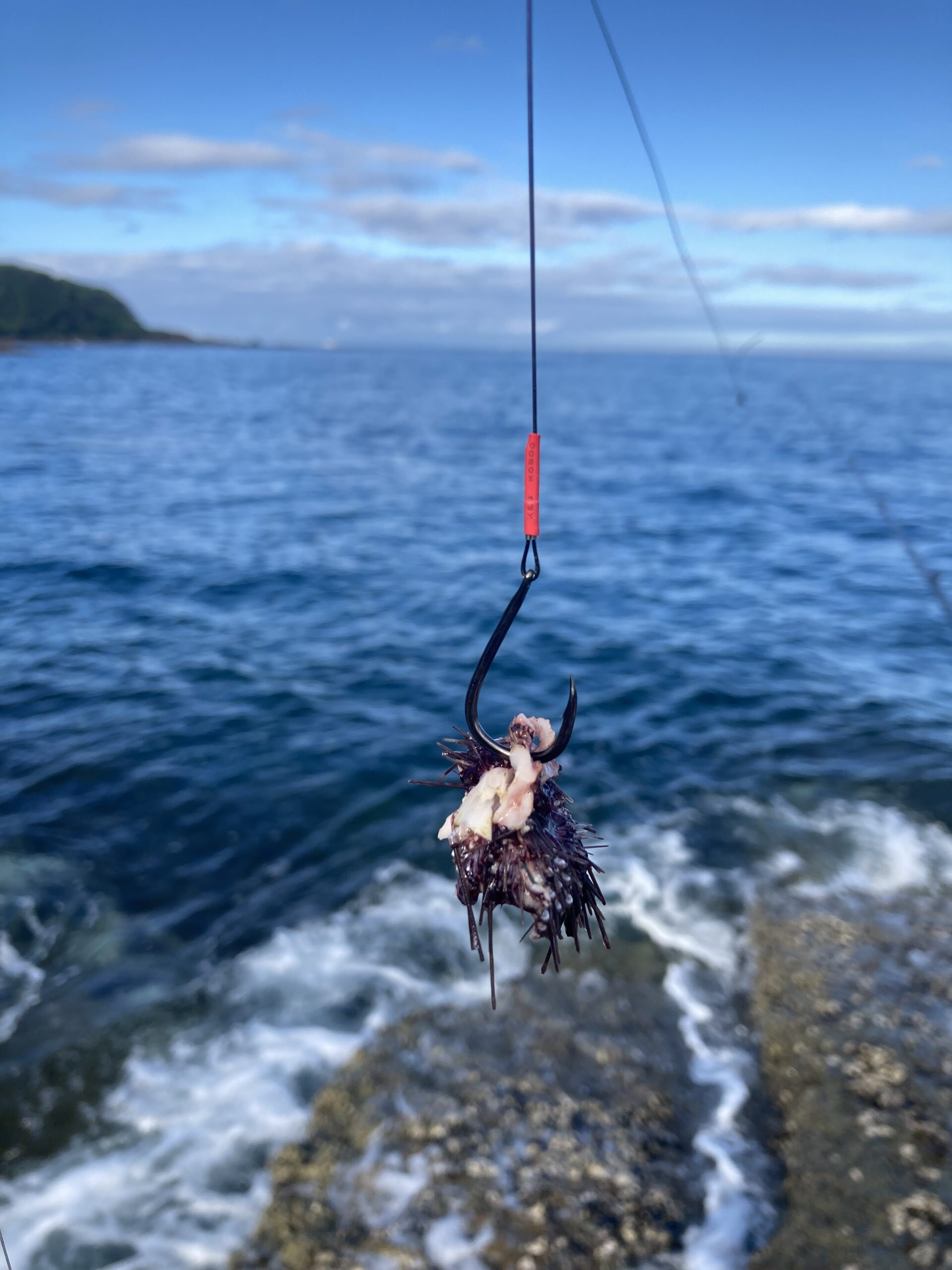 底物の磯釣りはエサ取りが多く、ウニがすぐに取られるようです。