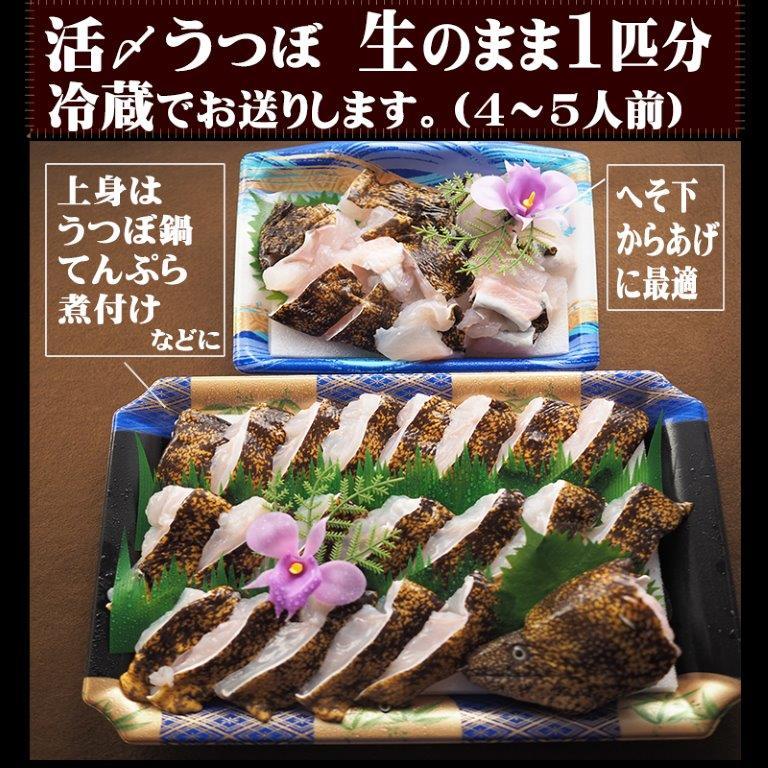 活絞めうつぼ1本さばきを、ご自宅でお召し上がりになりませんか?冷凍ではなく、生のままお届けするのは和歌山釣太郎キッチン。
